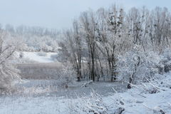 Winter. Landscape on a sunny morning Royalty Free Stock Images