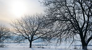 Winter landscape. Sunrise . Fields and trees in the snow. Wide p Stock Photography