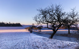 Winter landscape at sunrise and silhouette of trees Stock Photography