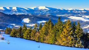 Winter Landscape. Sunrise. stock video