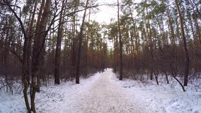 Winter landscape with sunset in birch forest. winter forest covered snow. landscape snow trees dense forest in winter. Forest wood winter. sunny day HD stock video