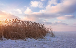 Winter landscape at sunset on the coast a frozen lake Stock Images