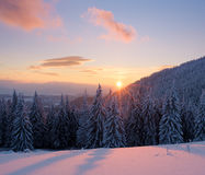 Winter landscape with sunset in the fir forest Royalty Free Stock Photos