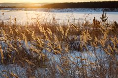 Winter landscape in sunset Stock Photos
