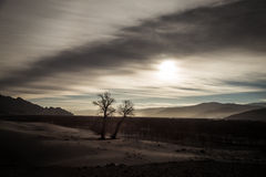 Winter landscape at sunset with tree, Tibet. Landscape at sunset with tree, Tibet. Photo taken in December 2014 Stock Images