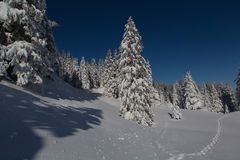Winter Landscape in Switzerland Stock Photos