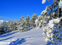 Winter landscape T Royalty Free Stock Images