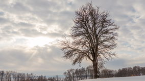 Winter landscape, timelapse of flying clouds above lonely tree with sun rays. Timelapse. stock video