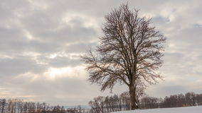 Winter landscape, timelapse of flying clouds above lonely tree. Timelapse. stock footage