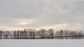 Winter landscape, timelapse of flying clouds above trees. Timelapse. stock video
