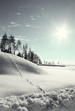 Winter landscape, toning Royalty Free Stock Image