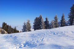 Winter landscape and traces on snow Royalty Free Stock Photography