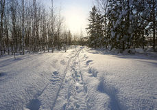 Winter landscape. track from wide skis Royalty Free Stock Image