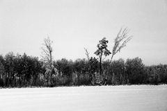 Winter landscape. With trea and snow Stock Images