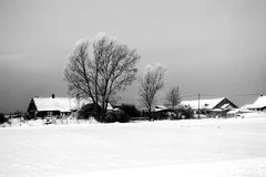 Winter landscape. With trea and snow Royalty Free Stock Photos