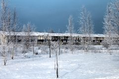 Winter landscape. With trea and snow Royalty Free Stock Photography