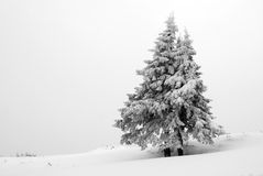 Winter landscape with tree Royalty Free Stock Images