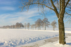 Winter landscape with tree. A sunny winter day in Dutch landscape Stock Image