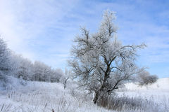 Winter landscape with tree Stock Images