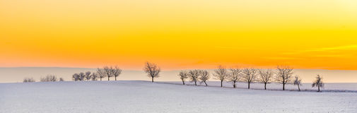 Winter landscape with tree alley  in sunset Royalty Free Stock Image
