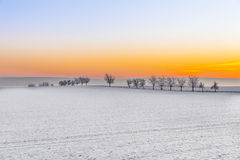 Winter landscape with tree alley  in sunset Stock Photography