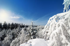 Winter Landscape. With Tree Branch Covered with Snow and Forest Top View royalty free stock image