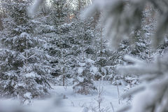 Winter landscape with tree covered with snow, winter photography Royalty Free Stock Image