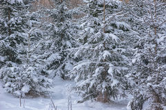 Winter landscape with tree covered with snow, winter photography Stock Photography