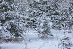 Winter landscape with tree covered with snow, winter photography Royalty Free Stock Photography