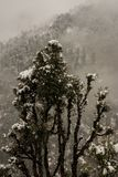 Winter landscape. Tree and dry grass plants in the snow. Snow caped mountain range in blurred background. Winter landscape. Tree and dry grass plants in the stock photography