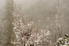 Winter landscape. Tree and dry grass plants in the snow. Snow caped mountain range in blurred background royalty free stock image