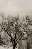 Winter landscape. Tree and dry grass plants in the snow. Snow caped mountain range in blurred background. Winter landscape.Tree and dry grass plants in the snow royalty free stock photography