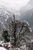 Winter landscape. Tree and dry grass plants in the snow. Snow caped mountain range in blurred background. Winter landscape. Tree and dry grass plants in the snow royalty free stock photo