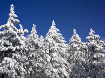 Winter Landscape, Tree Forest Covered by Snow. Tree Forest Covered by Snow, Winter Landscape royalty free stock image