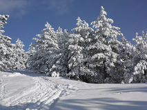 Winter Landscape, Tree Forest Covered by Snow Stock Images