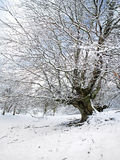 Winter landscape with tree and frozen branches Royalty Free Stock Image