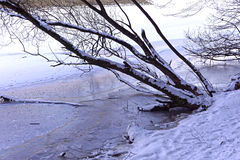 Winter landscape, tree and frozen lake Royalty Free Stock Photos