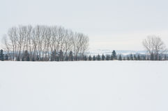 Winter Landscape of a Tree Grove stock photos