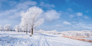 Winter landscape with tree and road royalty free stock photography