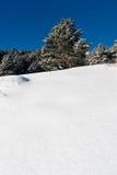 Winter landscape tree on snow. Seasonal concept Royalty Free Stock Photo