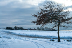 Winter landscape - tree in the snow Royalty Free Stock Image