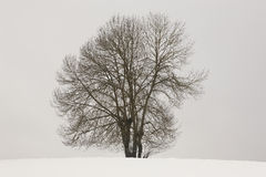 Winter landscape with tree and snow in Navarra, Spain Stock Image