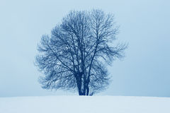 Winter landscape with tree and snow in Navarra, Spain Stock Photos