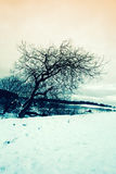 Winter landscape with a tree Stock Photography