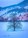 Winter landscape with tree and sunbeam Royalty Free Stock Photos