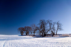 Winter landscape with trees Stock Photo