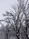 Winter landscape. Trees in the winter stock photography