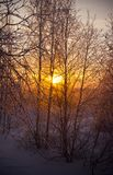 Winter landscape with trees royalty free stock photos