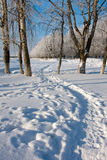 Winter landscape with trees Stock Images