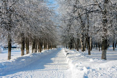 Winter landscape with trees Royalty Free Stock Photo
